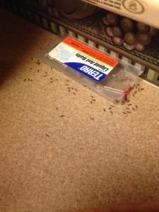 Stow-away ants.